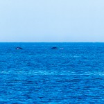 Wale am Horizont